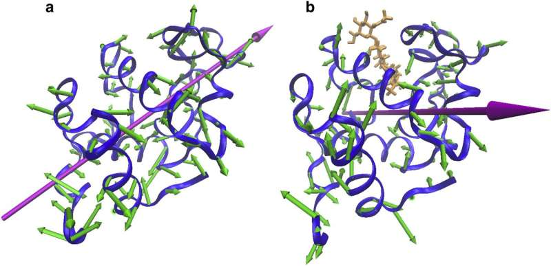 When proteins court each other, the dance moves matter