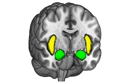 Which brain networks respond when someone sticks to a belief?