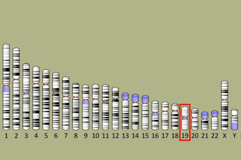 Which genetic marker is the ring leader in the onset of Alzheimer's disease?
