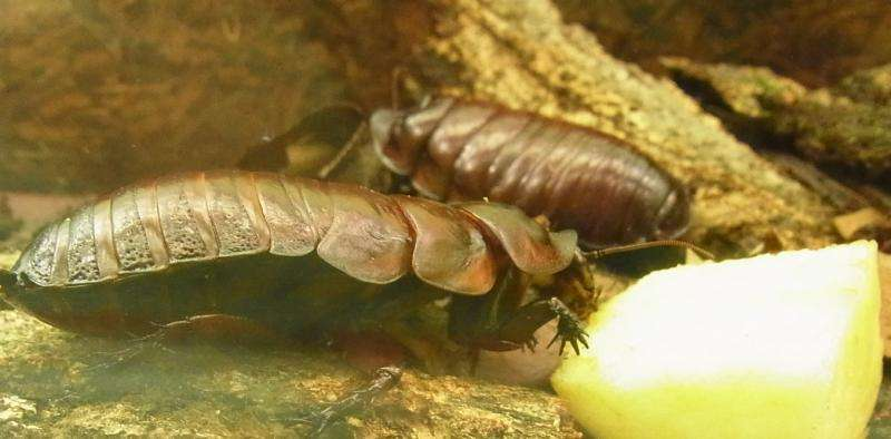 Why cockroaches and termites are great parents