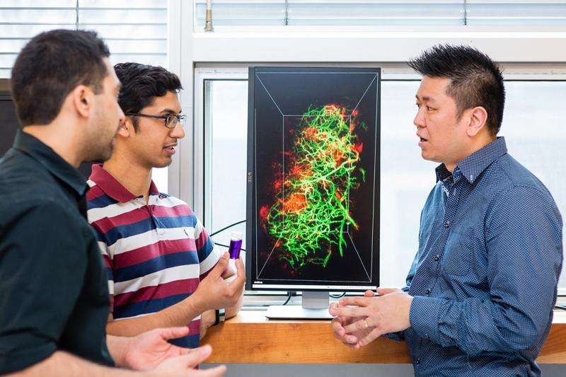 Why drugs don't reach cancer cells: U of T researchers develop technology to provide answers