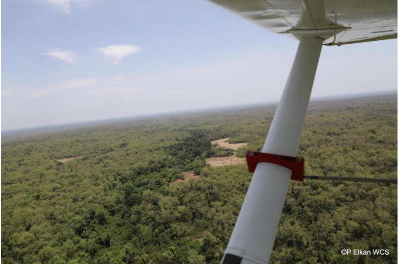 Wildlife of northern Central African Republic in danger