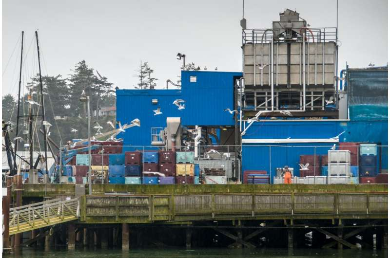 Workers' compensation claims offer insight into seafood processing injuries in Oregon