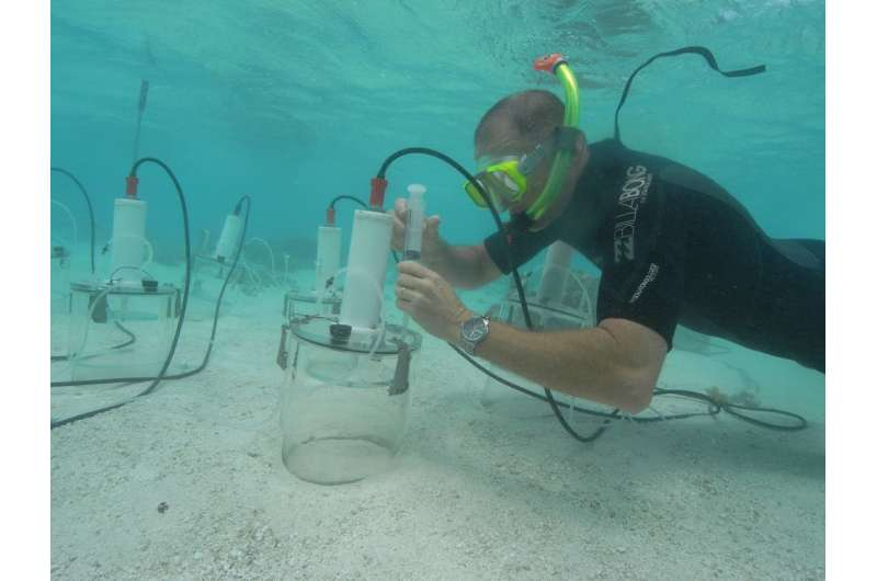 Acid oceans will dissolve coral reef sands withindecades