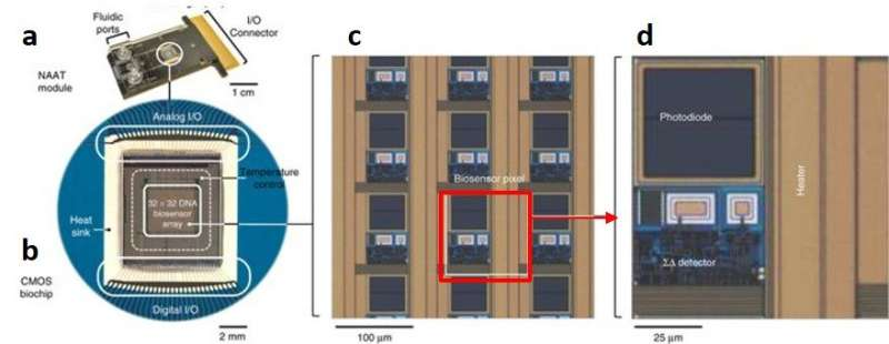 A Miniaturized Semiconductor Biochip to Identify Drug-Resistant Pathogens