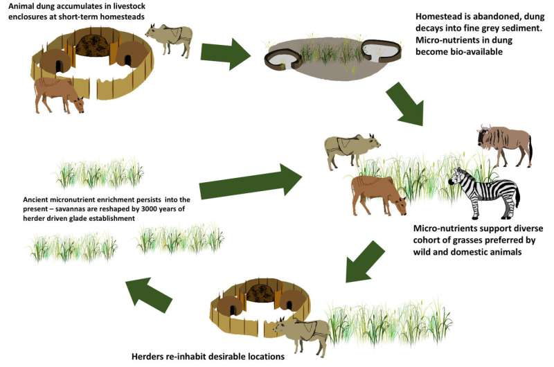 Ancient livestock dung heaps are now African wildlife hotspots