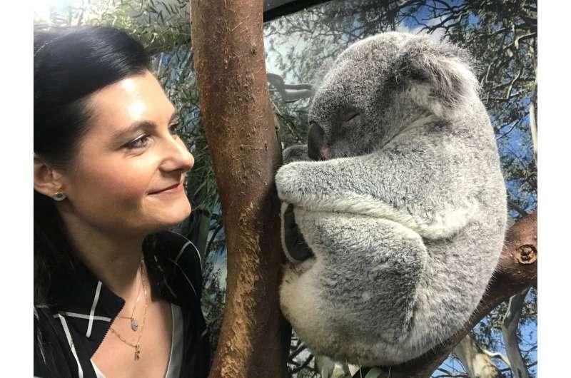 Australian scientists crack the genetic code of koalas