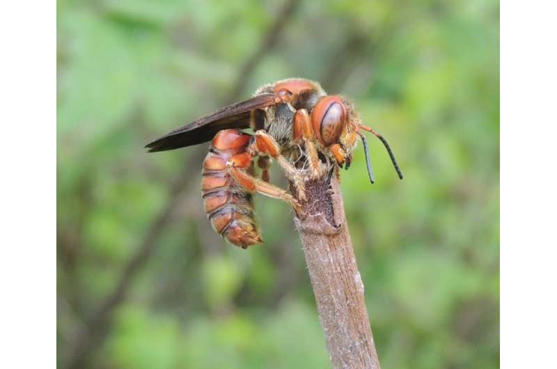Bee diversity and richness decline as anthropogenic activity increases, confirm scientists