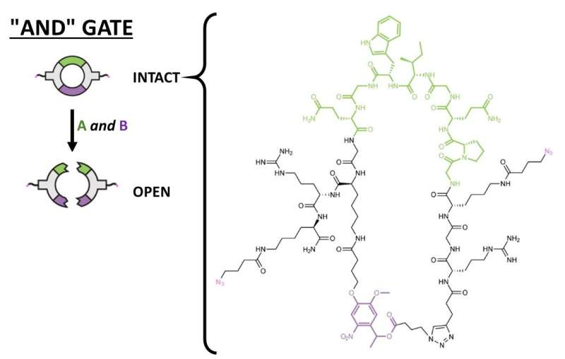 Biomaterials with 'logic gates' release therapeutics in response to environmental triggers