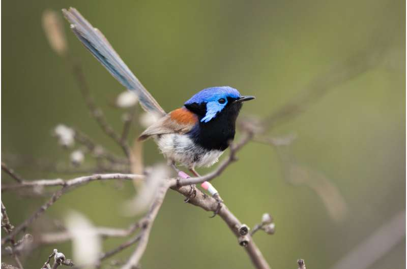 Birds from different species recognize each other and cooperate