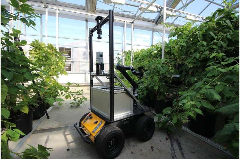 BrambleBee: An autonomous robot to pollinate bramble plants