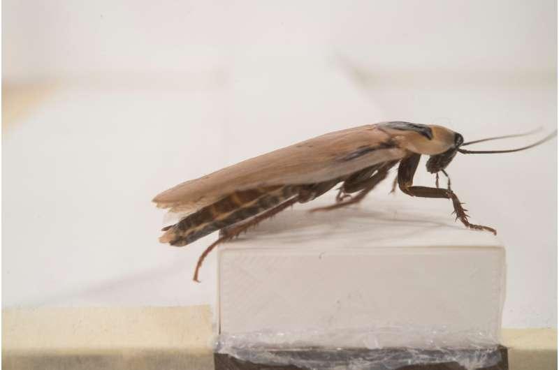 Can a cockroach teach a robot how to scurry across rugged terrain?