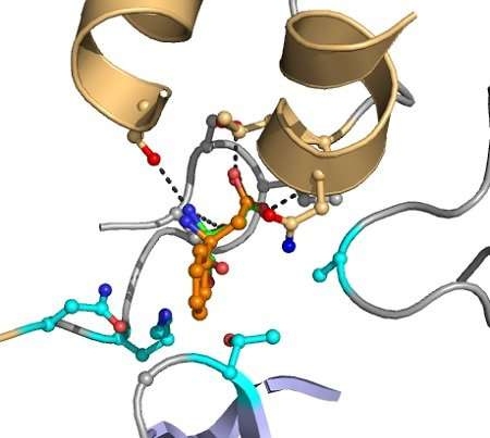 Computer redesigns enzyme