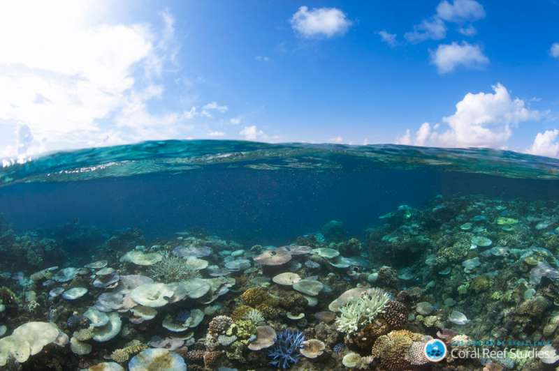 Coral bleaching threatens the diversity of reef fish