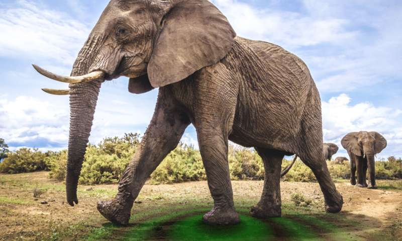 Could seismology equipment help to protect elephants from poachers?
