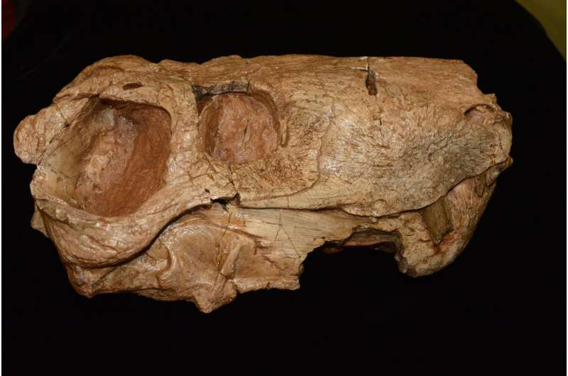 Decade of fossil collecting gives new perspective on Triassic period, emergence of dinosaurs