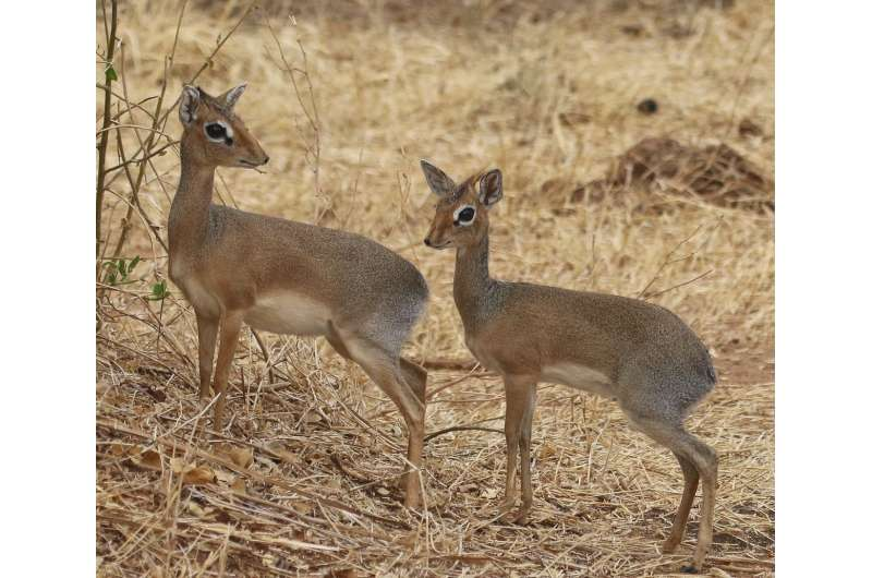 Ecological success of community-based wildlife conservation in Tanzania
