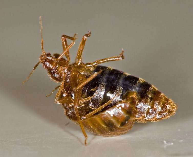 Everything you never wanted to know aboutbedbugs, andmore