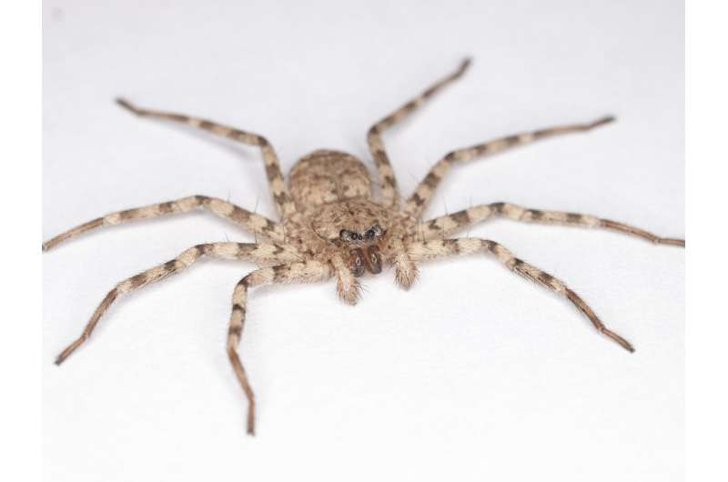 Fastest spin on Earth? For animals that rely on legs, scientists say one spider takes gold