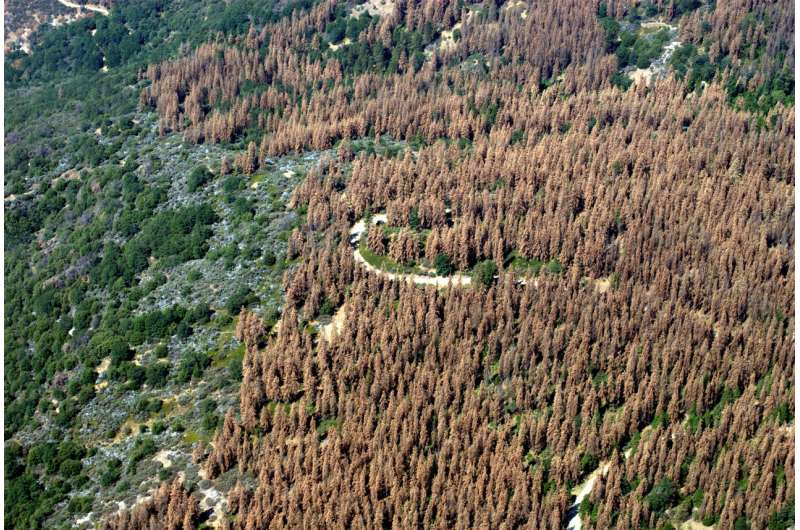 Forest loss in one part of US can harm trees on the opposite coast