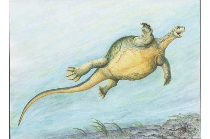 Fossil turtle didn't have a shell yet, but had the first toothless turtle beak