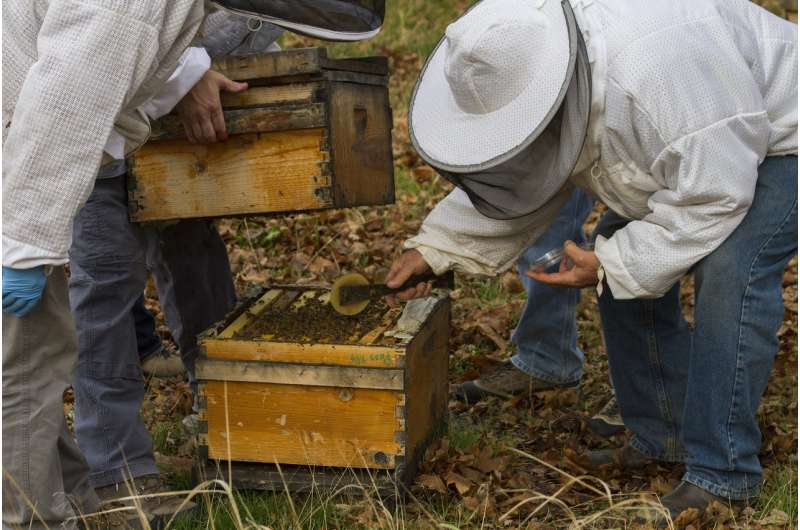Fungus provides powerful medicine in fighting honey bee viruses
