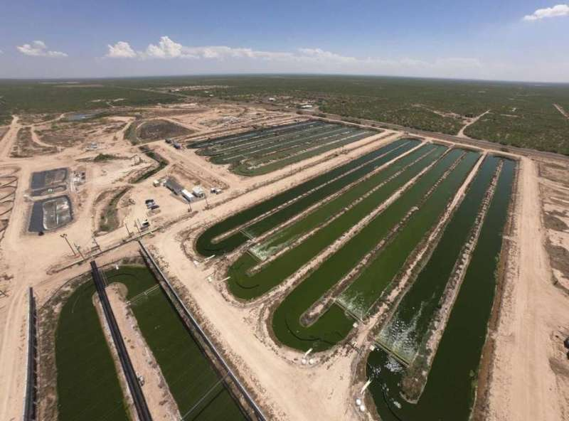 Growing algae more sustainably for biofuel production
