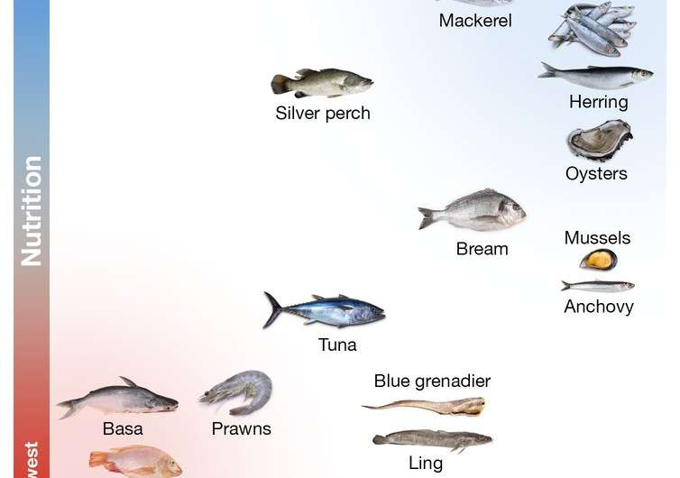 Here's the seafood Australians eat (and what we should be eating)