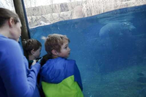 Hippo-y birthday to Fiona! The popular preemie is turning 1