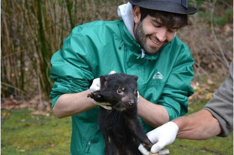 Human drugs could help treat transmissible cancers in Tasmanian devils