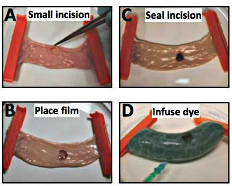 Laser-activated silk sealants outperform sutures for tissue repair