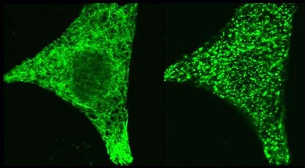 LJI investigators discover how protein pair controls cellular calcium signals