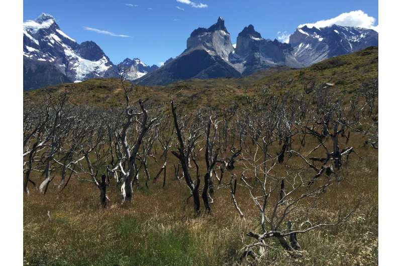 Montana State research determines reasons for massive fires in south-central Chile