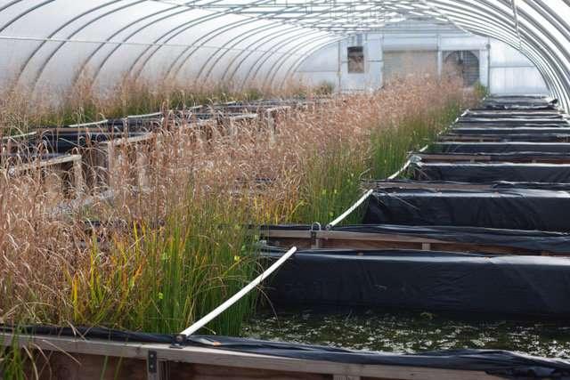 Nanomaterials could mean more algae outbreaks for wetlands, waterways