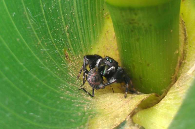 Natural habitat can help farmers control pests, but not always a win-win