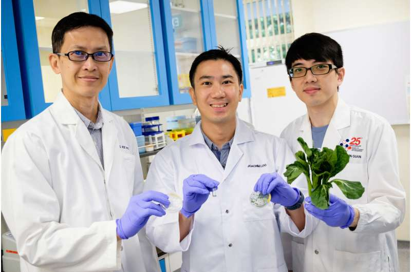 NTU and Harvard scientists discover fat-blocking effect of nanofibers
