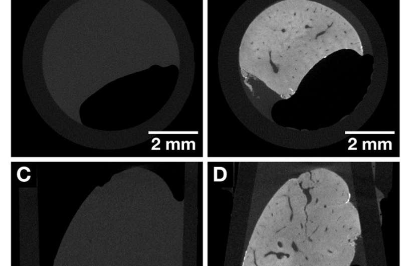 Nucleus-specific X-ray stain for 3D virtual histology
