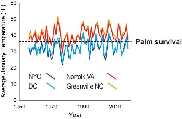 Palm trees are spreading northward. How far will they go?