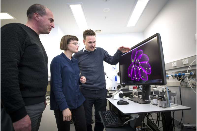 Parasite makes quick exit when researchers remove the handbrake