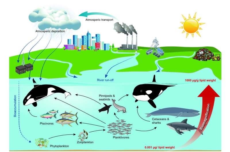 PCB pollution threatens to wipe out killer whales
