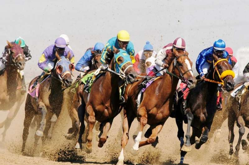 Racing can be fatal to horses, new study reveals