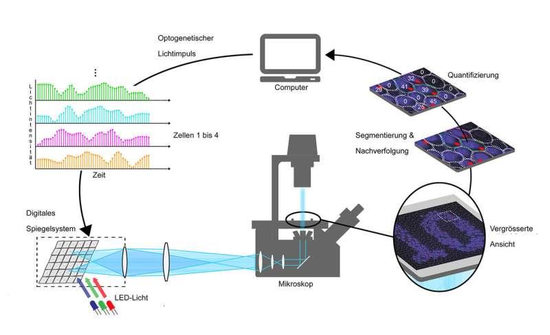 Regulating gene transcription using light