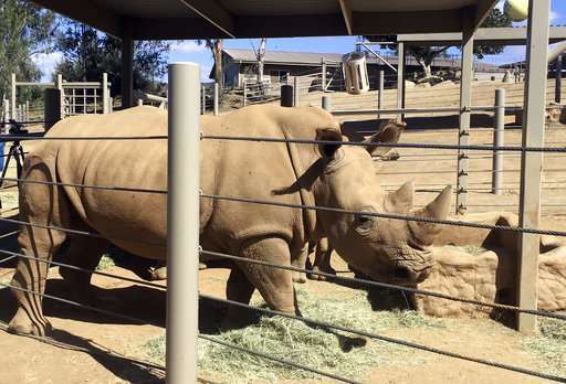 Rhino in San Diego pregnant, could help save subspecies