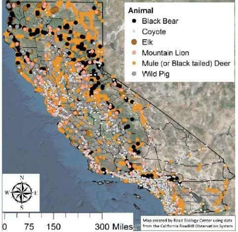 Roadkill report a roadmap to avoiding wildlife collisions