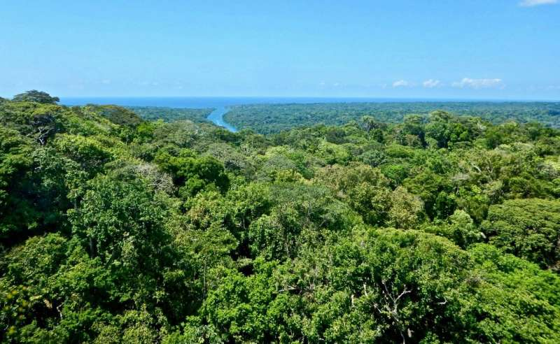 Seasonal patterns in the Amazon explained