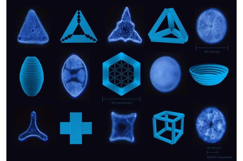 Single-celled architects inspire new nanotechnology