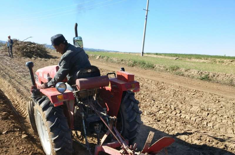 Soil tilling, mulching key to China's potato crop