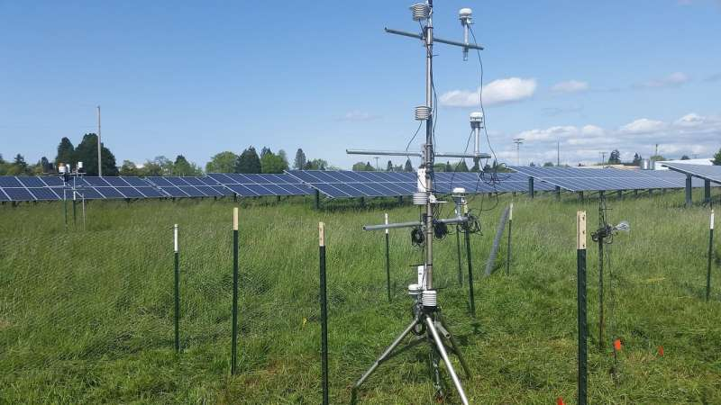 Solar arrays could be used as resources for plant productivity, study shows