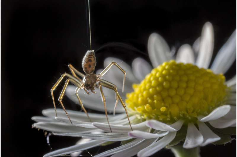 Spiders go ballooning on electric fields