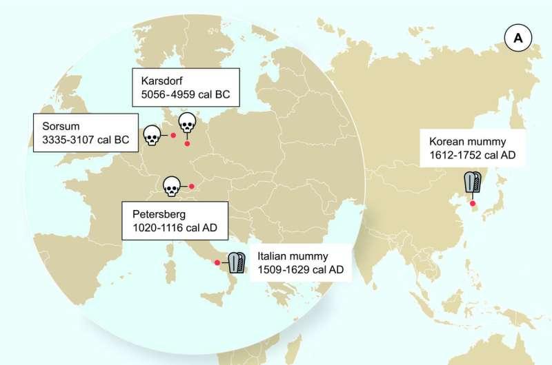 Stone Age hepatitis B virus decoded